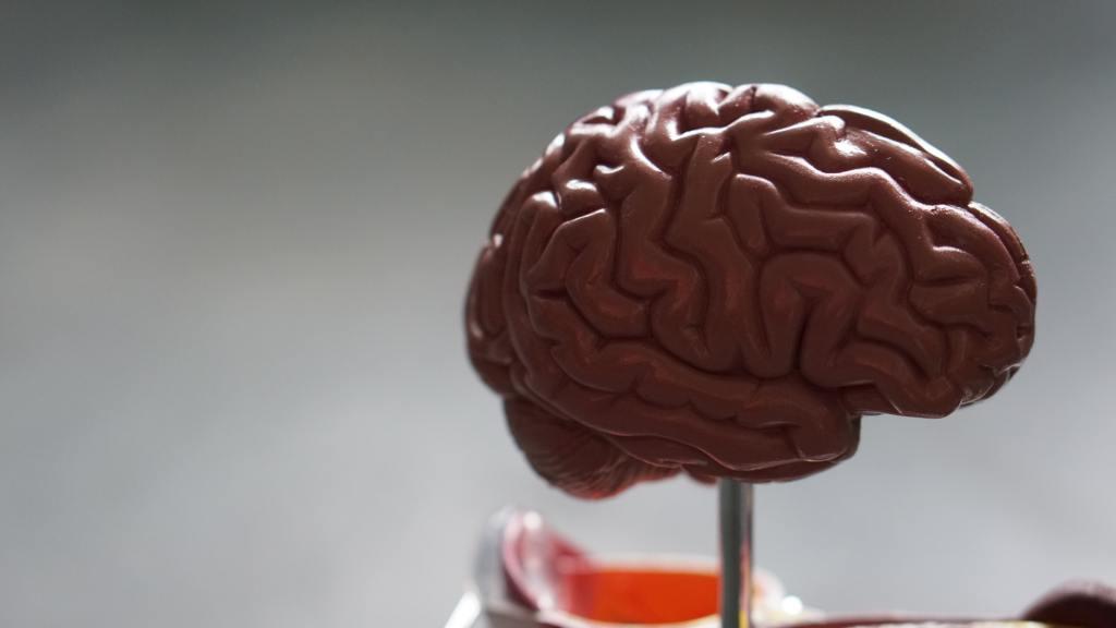 A pink, 3-D model of a brain.
