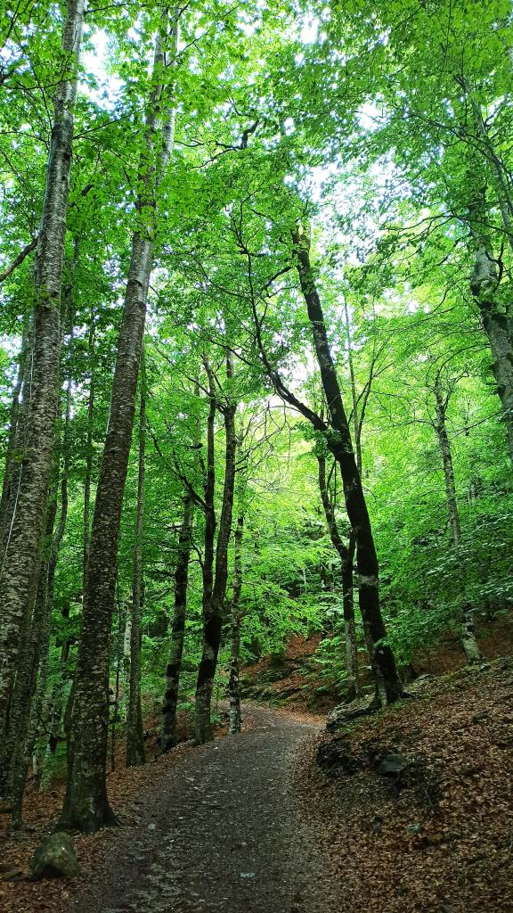 A hiking trail surrounded by trees, meant to represent some of the available trails in Maryland.